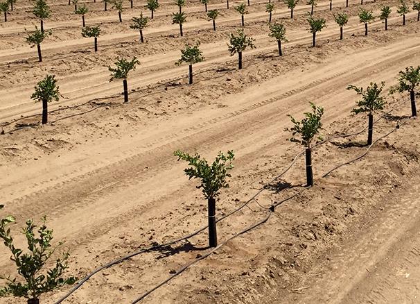 treeshields-field-photo-2